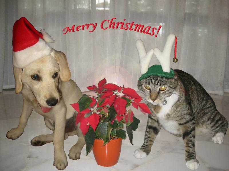 christmas mindvalley